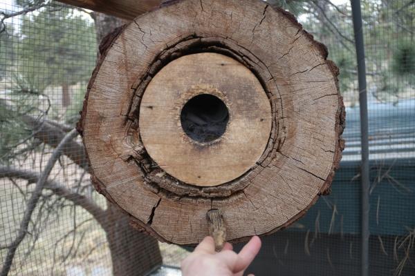 Name:  looking in log.jpg Views: 70 Size:  116.1 KB