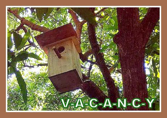 Name:  nest box June 19-2.jpg Views: 26 Size:  87.6 KB