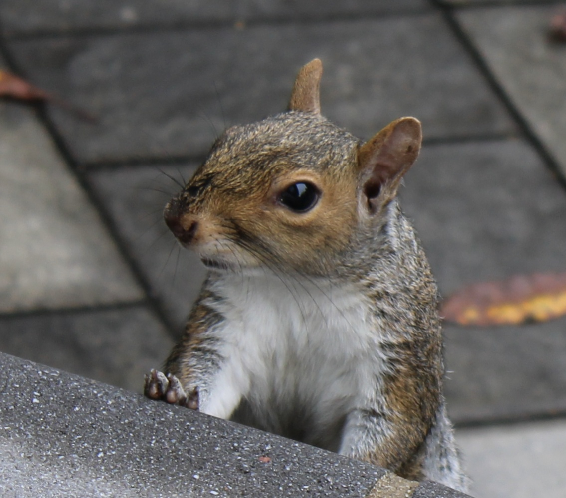 Name:  Squirrel1.jpg Views: 90 Size:  271.5 KB