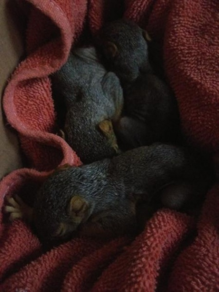 Name:  Squirrel One.jpg Views: 38 Size:  72.0 KB