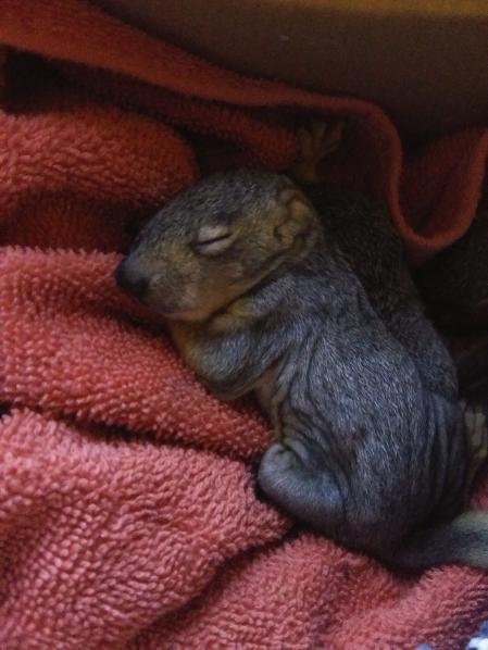 Name:  Squirrel Two.jpg Views: 37 Size:  38.2 KB