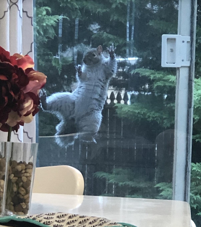 Name:  Squirrel4.jpg Views: 88 Size:  428.2 KB