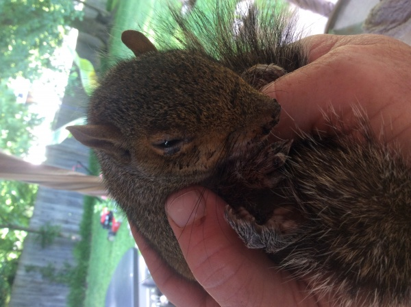 Name:  Squirrel1.jpg Views: 74 Size:  103.6 KB