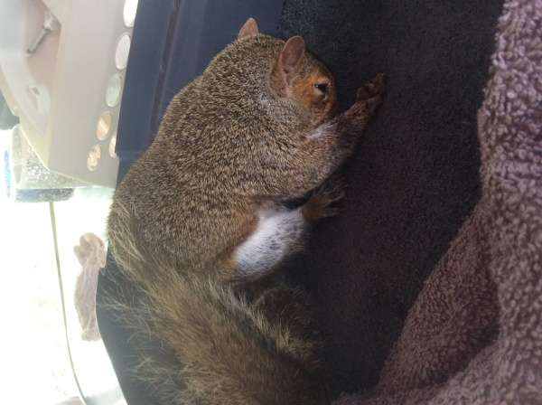 Name:  squirrel3.jpg Views: 73 Size:  98.5 KB