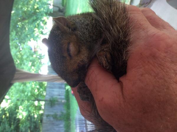 Name:  Squirrel2.jpg Views: 64 Size:  87.2 KB