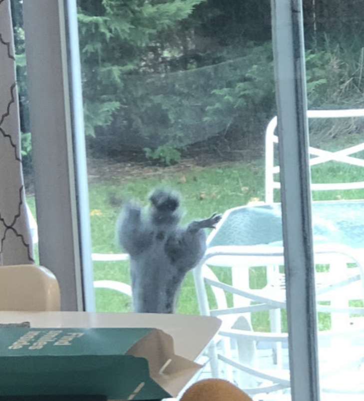 Name:  Squirrel2.jpg Views: 100 Size:  144.9 KB