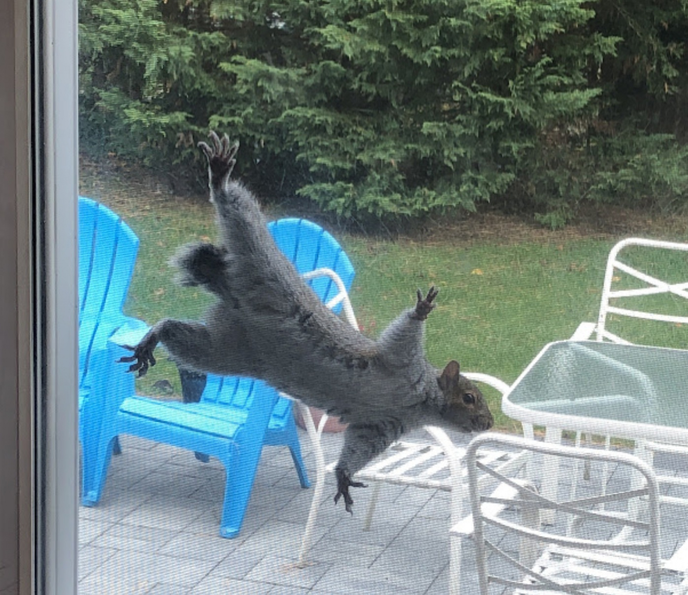 Name:  Squirrel3.jpg Views: 84 Size:  504.3 KB