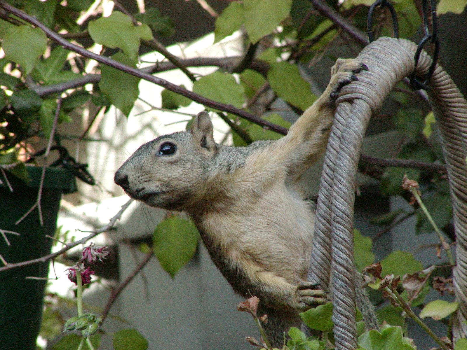 Name:  squirrel 019.jpg Views: 403 Size:  454.9 KB