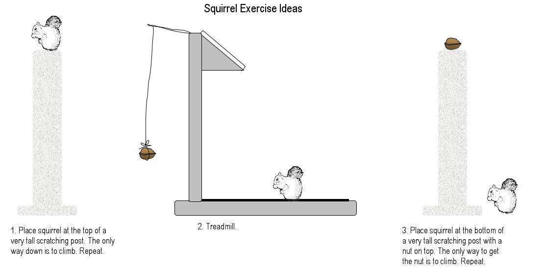 Name:  squirrel exercise ideas.jpg Views: 2775 Size:  80.4 KB