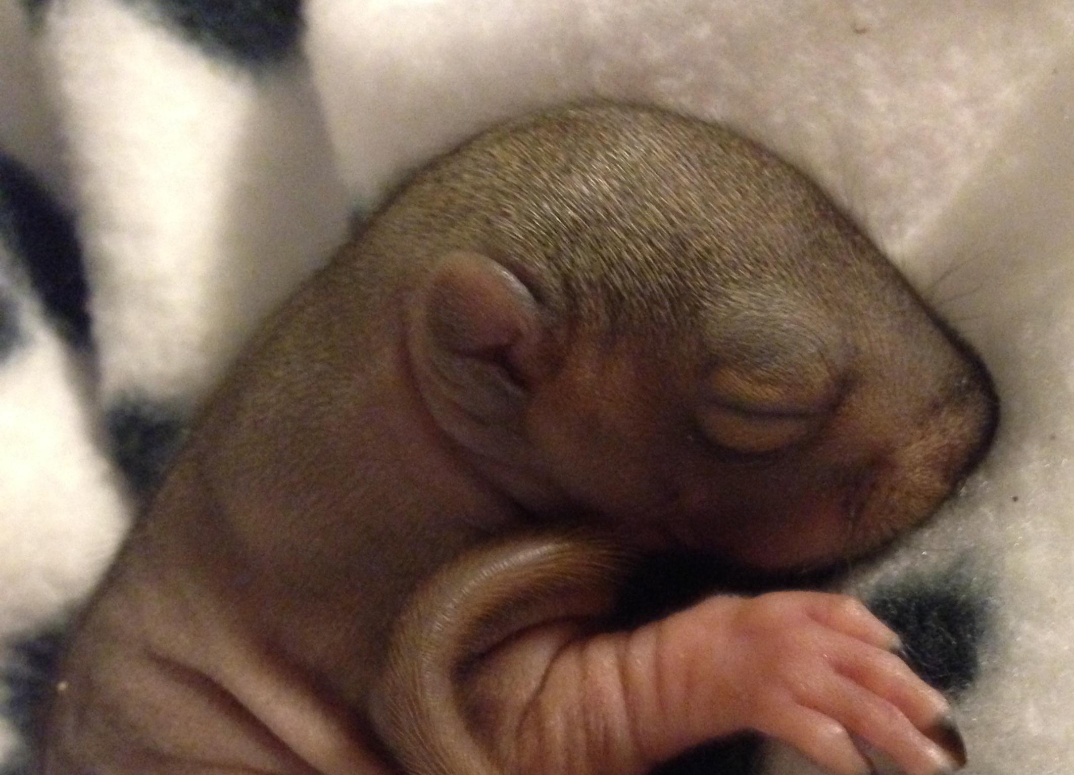 Name:  baby squirrel 2.JPG Views: 39 Size:  796.5 KB