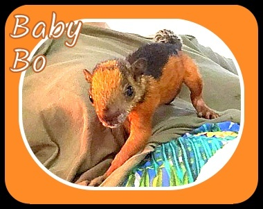 Name:  Baby BO TSB June 2020-001.jpg Views: 20 Size:  64.4 KB