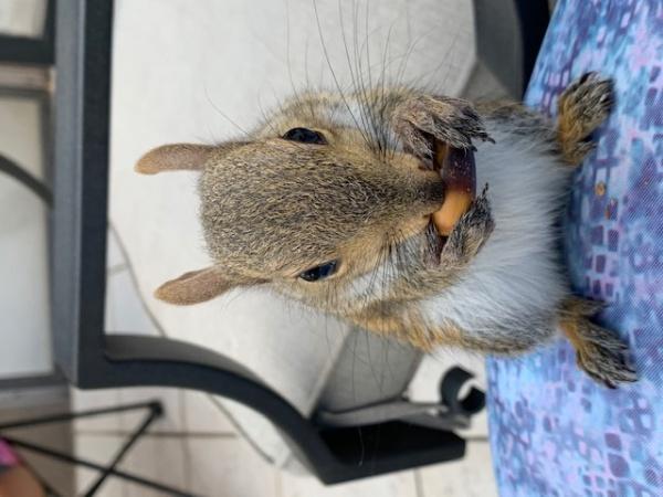 Name:  Chiquita eating acorn 9 weeks.jpg Views: 42 Size:  91.4 KB