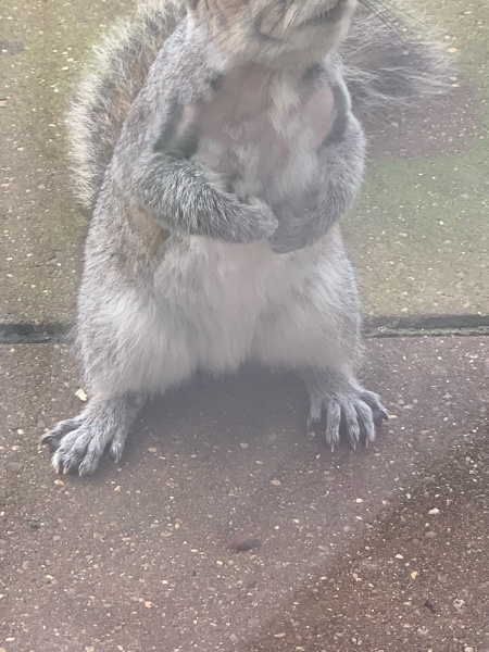 Name:  Squirrel Pic 2.jpg Views: 84 Size:  127.2 KB