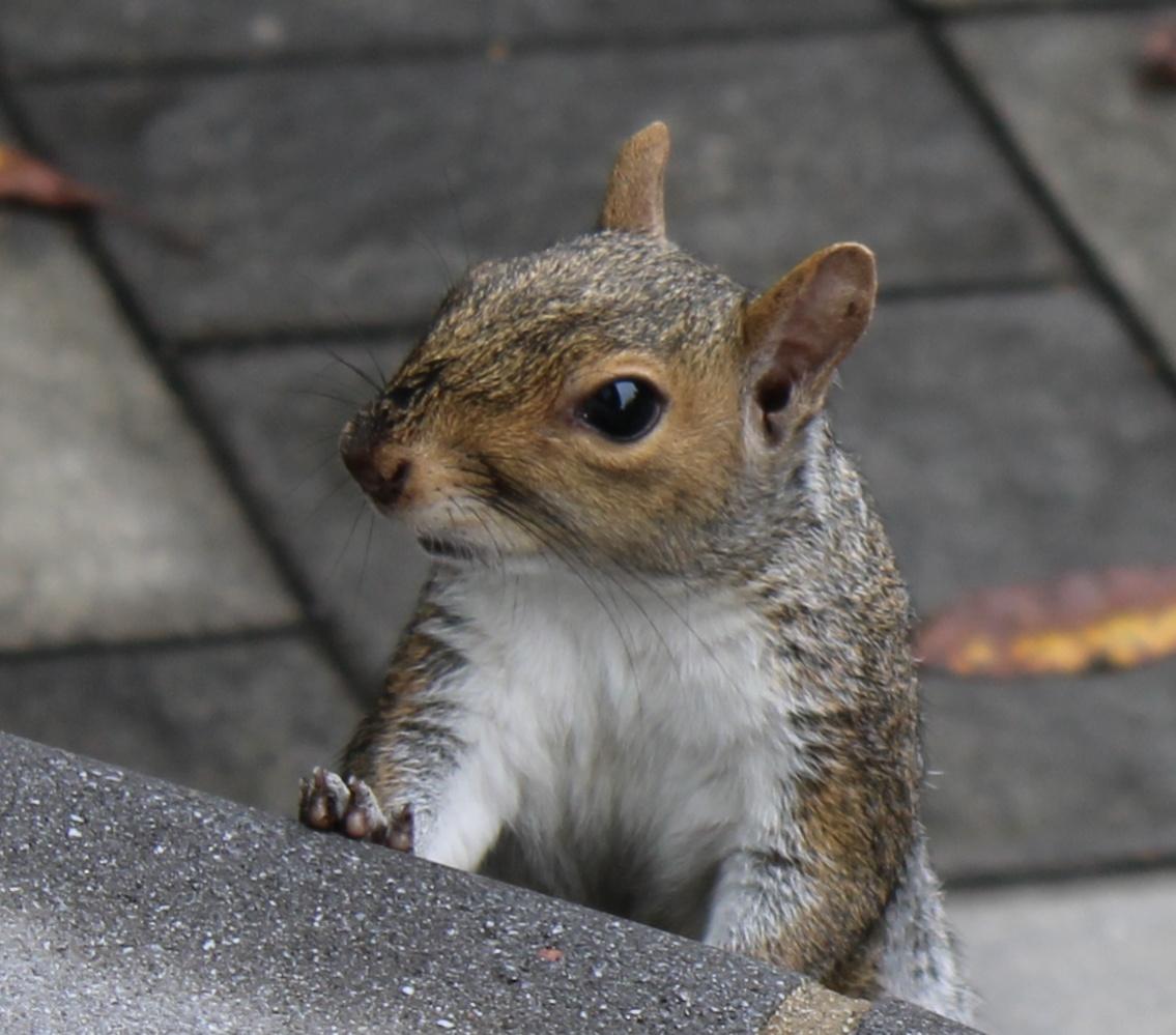 Name:  Squirrel1.jpg Views: 133 Size:  271.5 KB