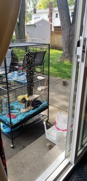 Name:  Buddy in Cage in the Backyard with a friend.jpg