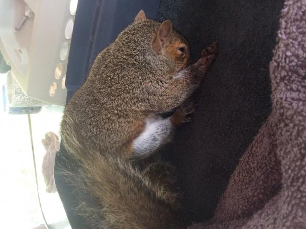 Name:  squirrel3.jpg Views: 64 Size:  98.5 KB