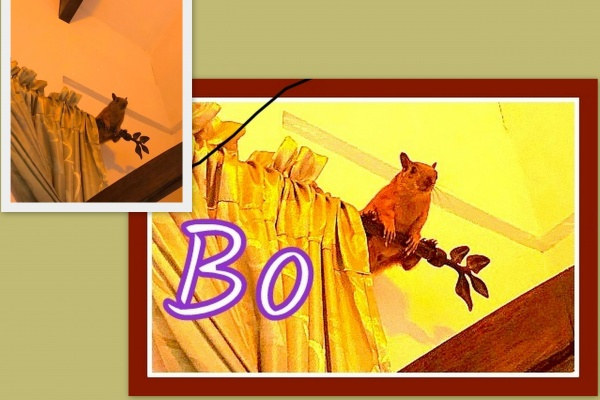 Name:  BO collage.jpg