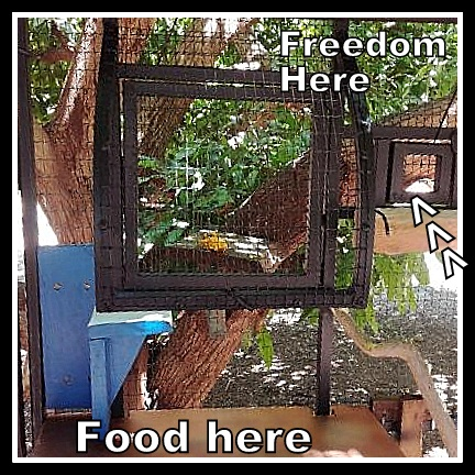 Name:  cage 3 jpeg.jpg Views: 25 Size:  123.2 KB