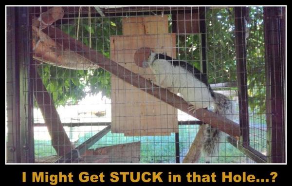 Name:  mancha nest box.jpg Views: 25 Size:  104.8 KB