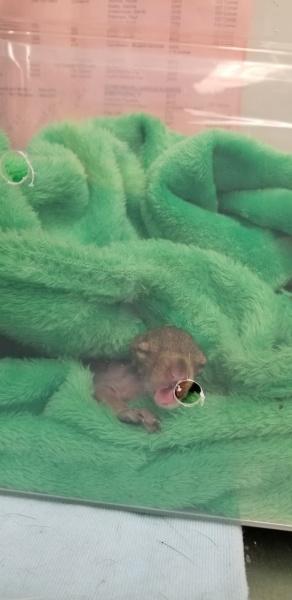 Name:  squirrelresized.jpg Views: 22 Size:  53.5 KB