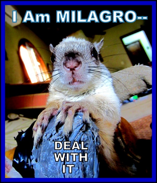 Name:  Milagro-deal with it (1).jpg