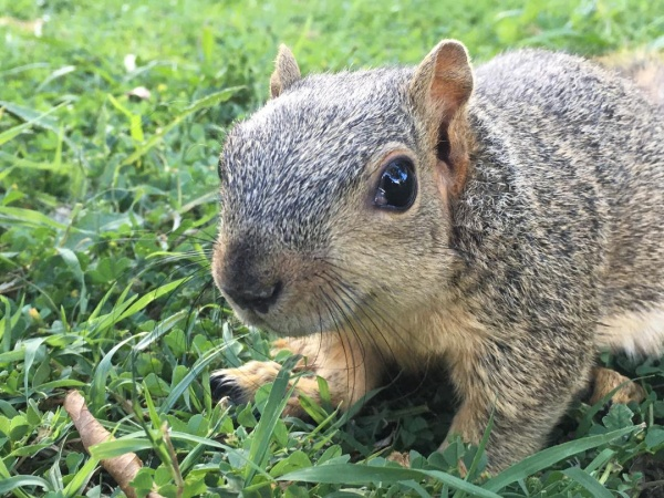 Name:  For squirrel board.jpg Views: 62 Size:  153.0 KB